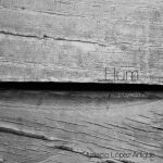 web_hum_2016-ila